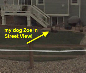 my faithful pooch Zoe is now immortalized in Street View!